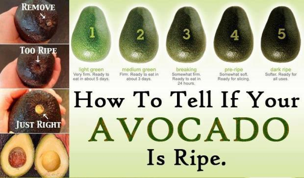 Is your avocado ripe?