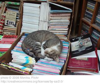 gatto che dorme sui libri