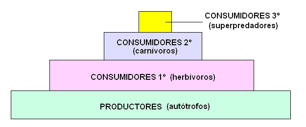 CIENCIAS BIOLOGICAS: PIRAMIDES TROFICAS