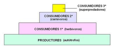 esquema de una pirámide alimentaria
