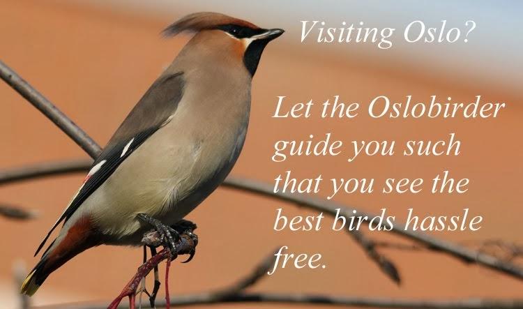 BIRD GUIDING AROUND OSLO