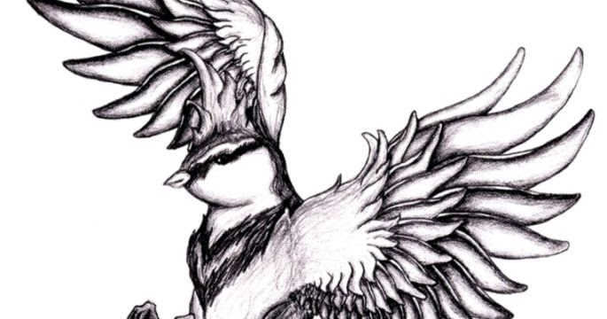 bird drawing tumblr flying wallpapers gallery