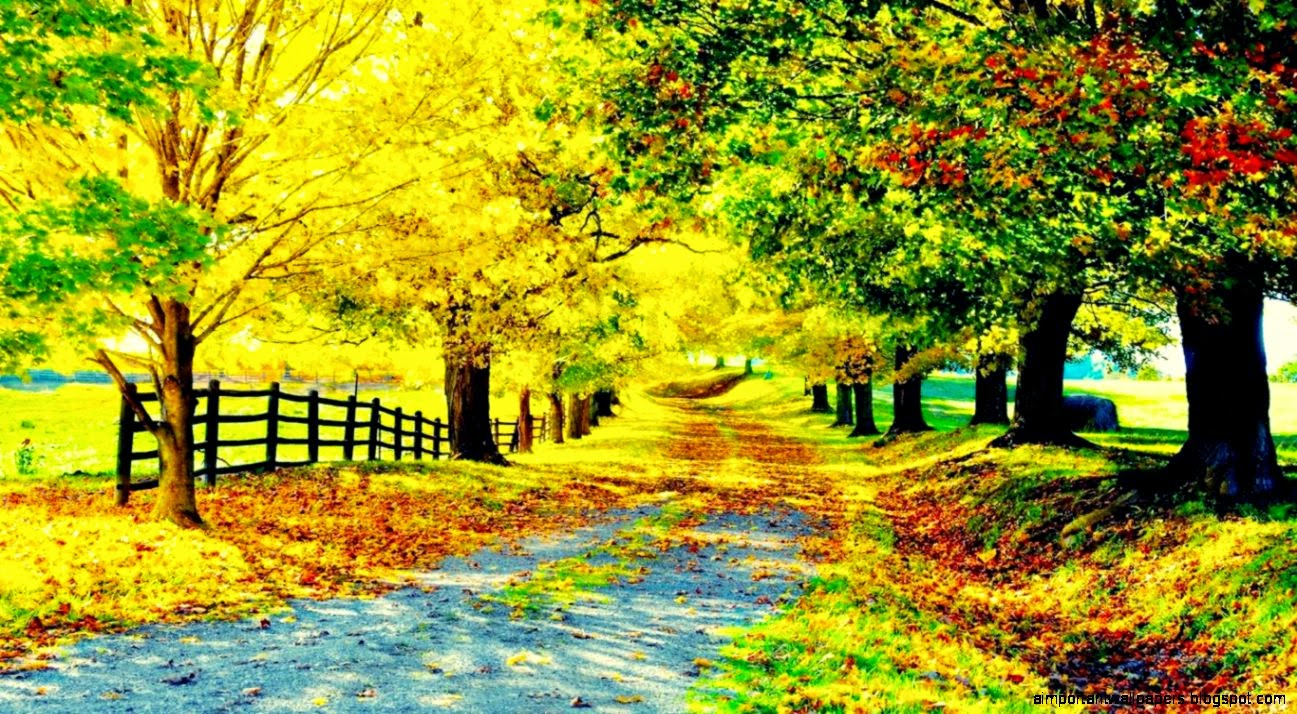 Nature Beautiful Road Backgrounds