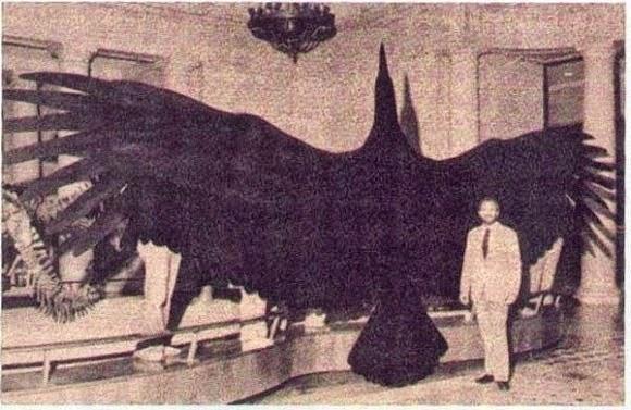 The 'Alien Bird' that Terrified Australia