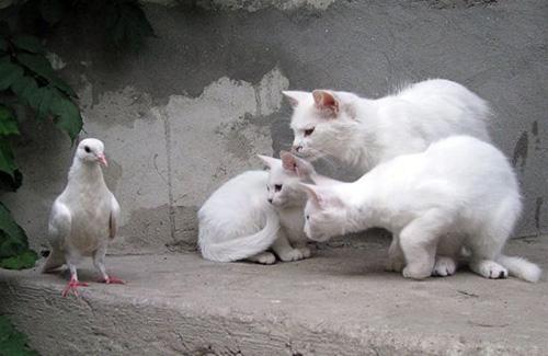 Las fotos más graciosas de gatos pequeños