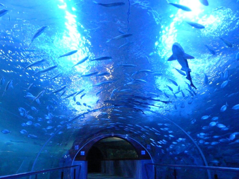 See donosti visitas - Aquarium donosti precio ...