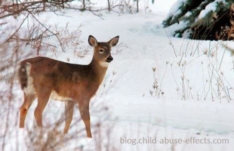Winter White-Tailed Deer