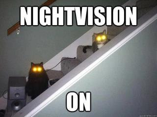 Two cats with glowing eyes on stairs