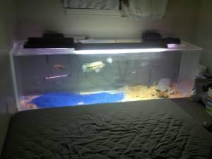 Giant aquariums 300 gallon acrylic aquarium 1000 for Fish tanks craigslist