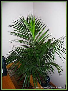 palm houseplant