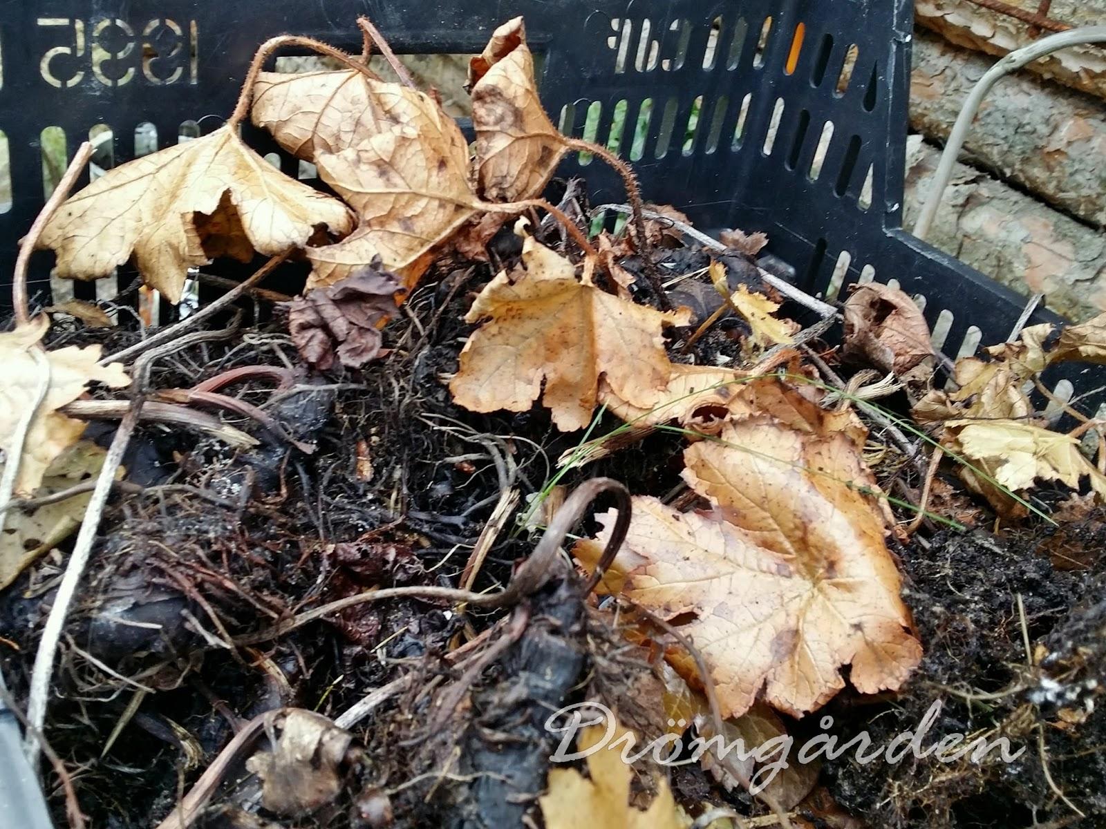 Drömgården: trädgårdsjobb 1:a november
