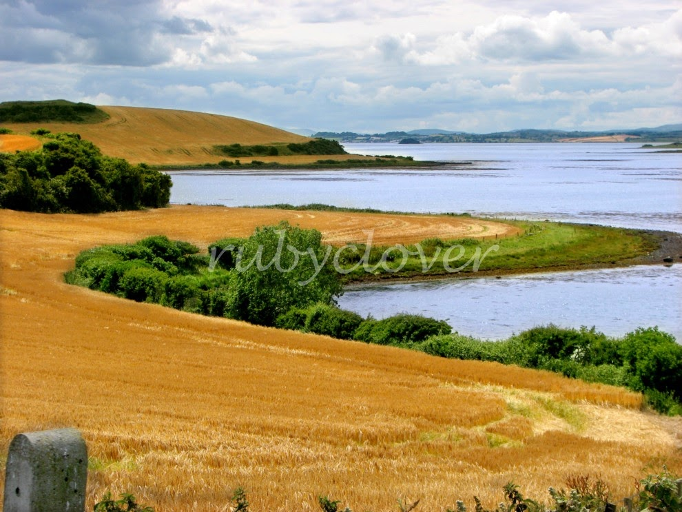 Fields of Gold, Co. Down, N. Ireland