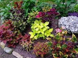 jual tanaman minimalis