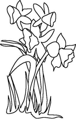 Daffodil Colouring Pages  Activity Village
