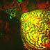 Cientistas descobrem o Primeiro Réptil Biofluorescente!