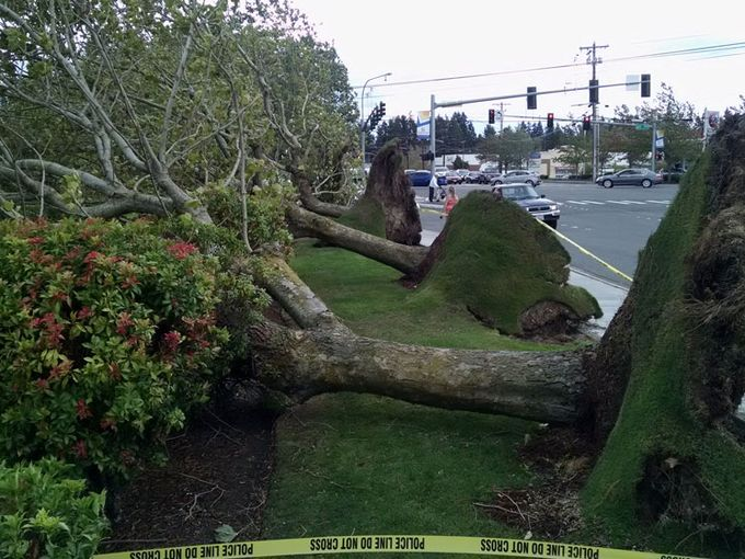 250,000 without power as deadly wind storm hits Seattle and Vancouver Sunday