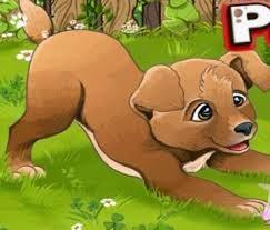 Köpek Eğiticisi Yeni
