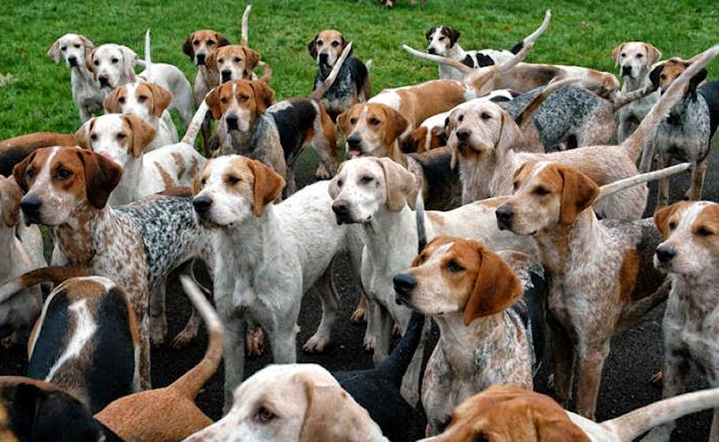 Fukushima Hounds Forum - click the hounds