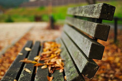 Annie's Gardening Corner: The Park Bench