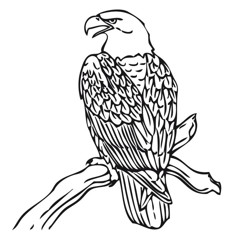 Dibujo Para Colorear Aguila Real Car Tuning