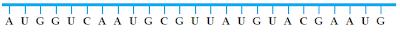 Rantai tunggal RNA duta