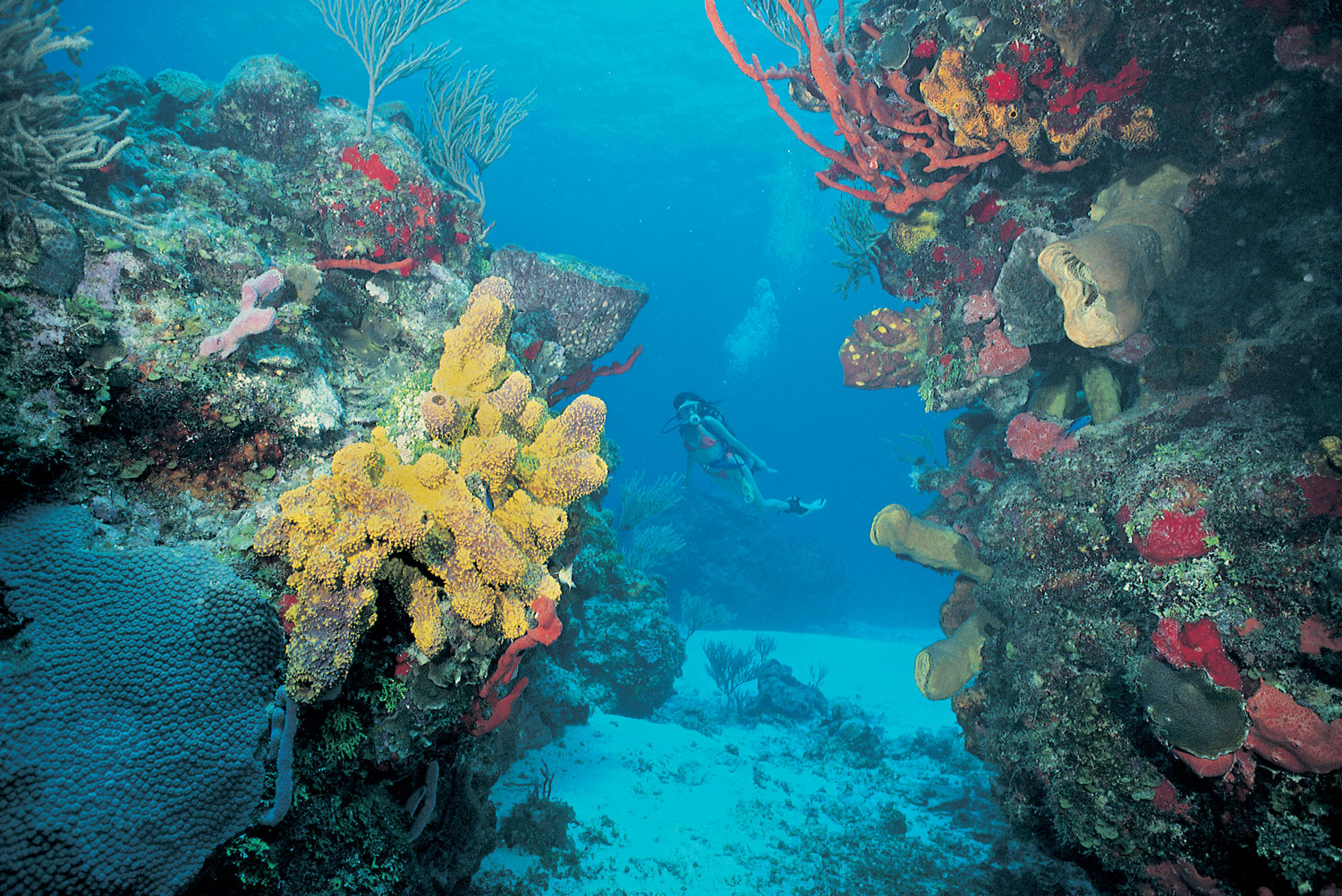 diving coral reef - photo #13