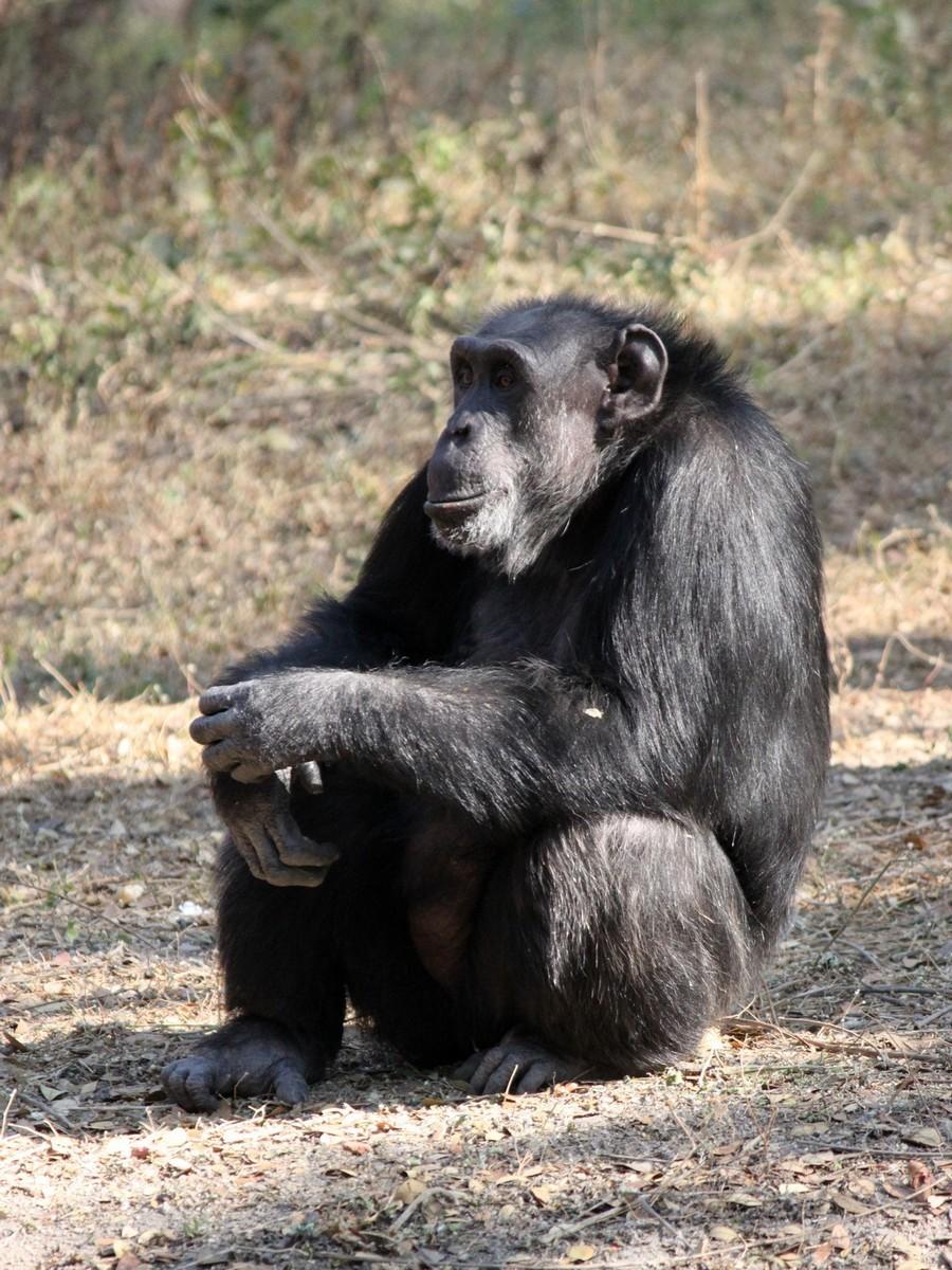 обезьяна в размышлениях