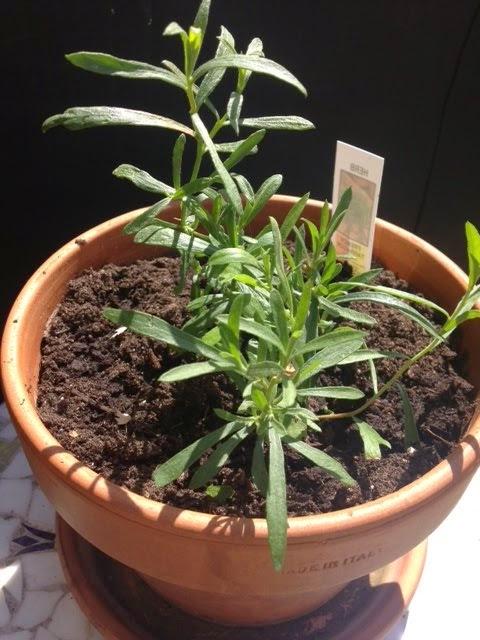 Springtime Herb Garden