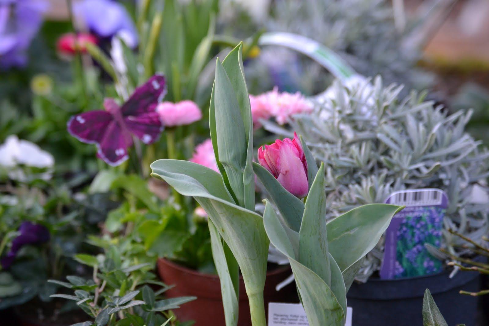 Spira trädgårdsdesign: mars 2012