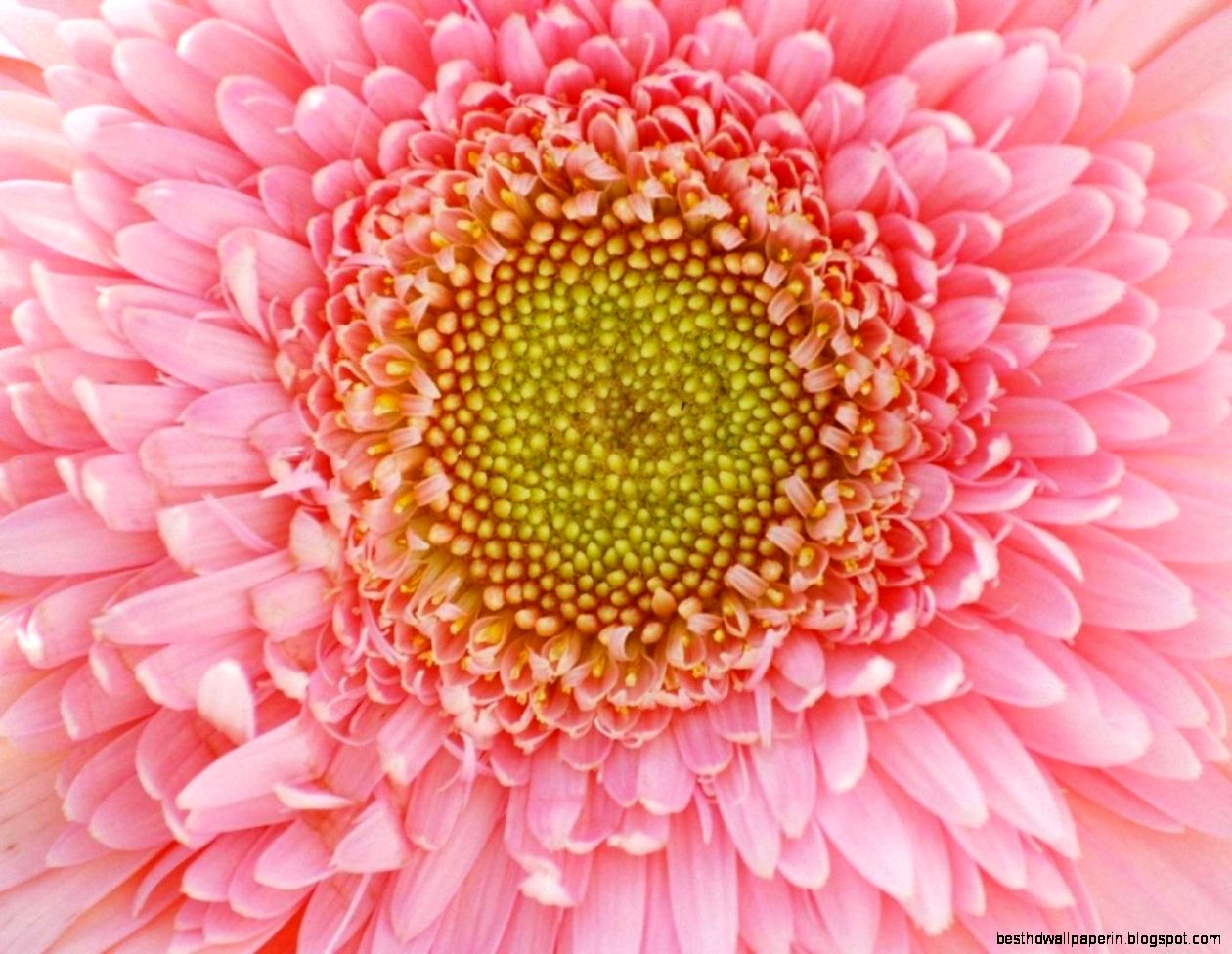 Beautiful Flower Images Free Download Best Hd Wallpapers