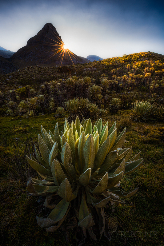 The sun rising above mountains and frailejones in Parque Nacional Natural El Cocuy
