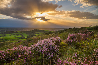 sunset view in valley full of flowers