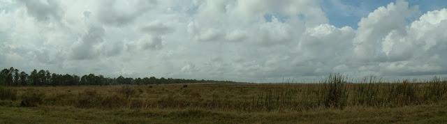 Praderas para el ganado en Charlotte County
