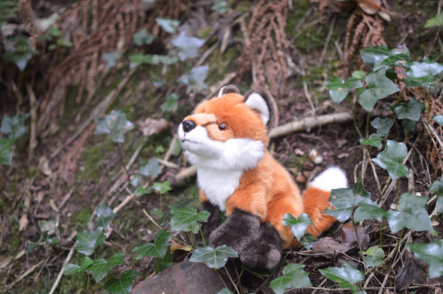 Autumn Woodland Walk Fox