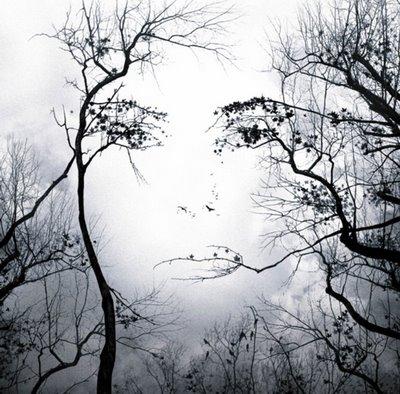 Arbre déprimant détruit tristement Mujer-divina1