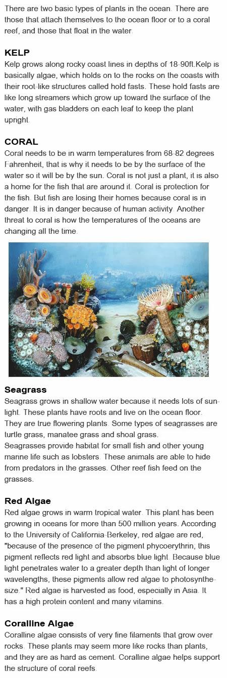 Plants in the ocean for kids