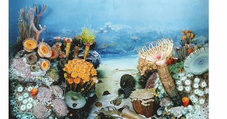 Plants in the ocean for kids | Childhood Education