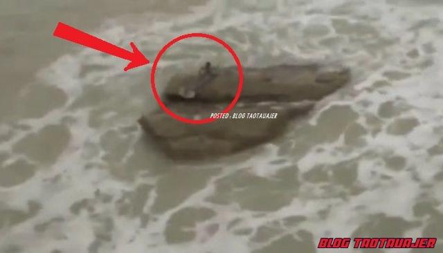 gambar hewan - foto ikan duyung
