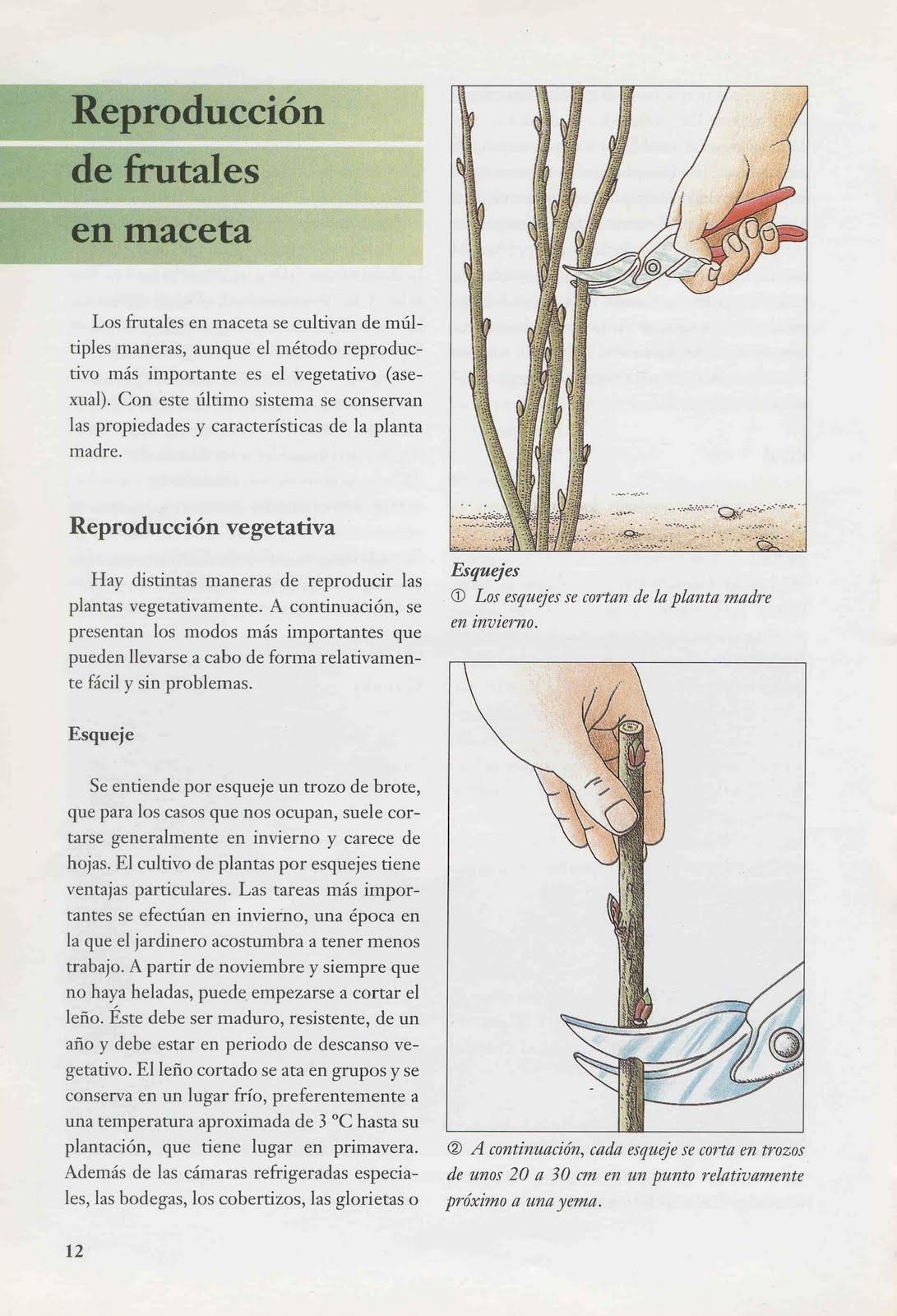 Macetohuerto paso a paso limonero en maceta for Cultivo de arboles frutales en macetas