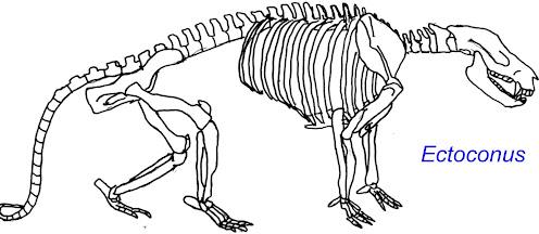 Ectoconus 65 millones de años atras