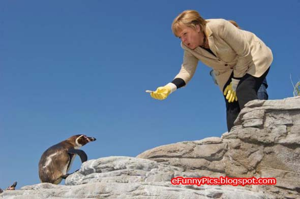 Merkel with a Penguin
