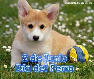 perro con pelota de juguete
