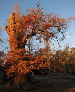 arbre multi centenaire