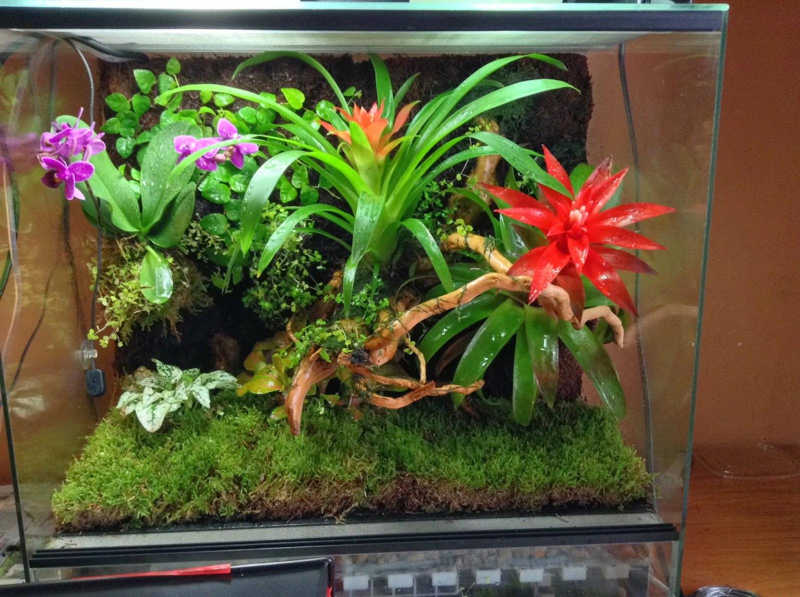 Escamas y terrarios terrario tropical for Como criar caracoles de jardin