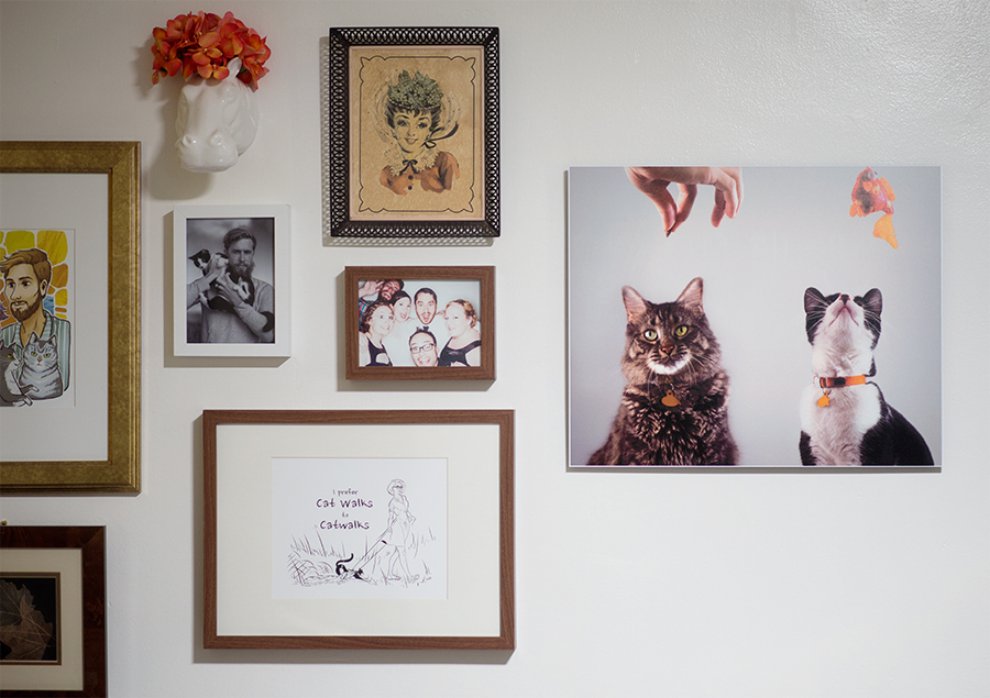 3 Steps For Better Cat Photos - littleladylittlecity.com