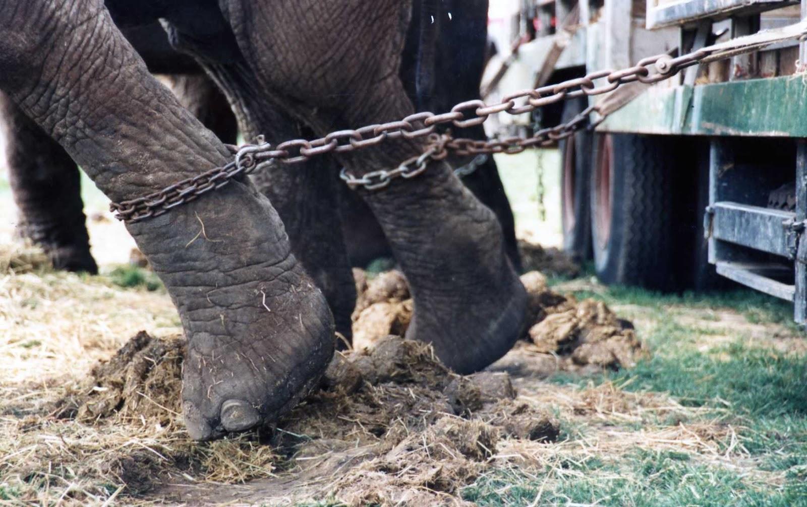 stop animal circus
