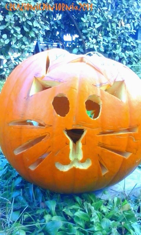 gatto-zucca= zuccatto?