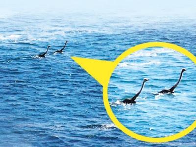 Burung unta boleh berenang