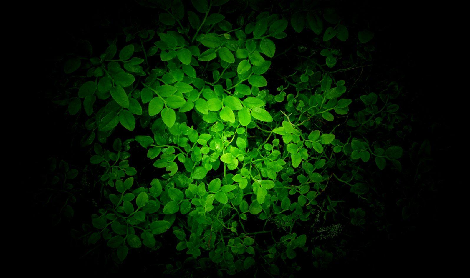 Green Wallpaper   Best HD Wallpaper