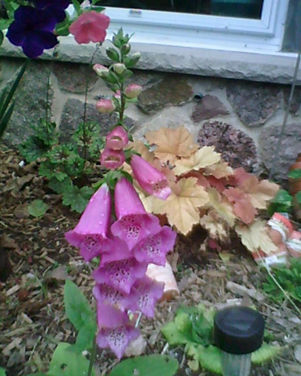 renaissance woman retired aspen groves and fairy gardens summer